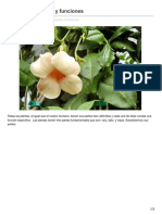 -Las Plantas Partes y Funciones