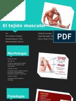El-tejido-muscular(2).ppt