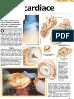 Bolile cardiace.pdf