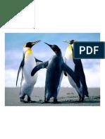 Pinguinos animales asombrosos