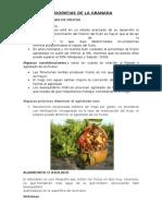 FISIOPATIAS DE LA GRANADA.docx