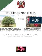 Recursos Flora URP