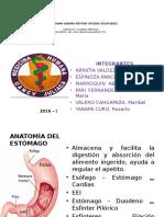 Expo... Gastritis y Ulceras Pepticas