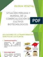 biotecnologia vegeta.ppt