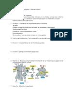 GUIA de ESTUDIO Lisosomas y Peroxisomas