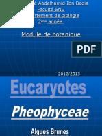 Pheophyceae Pheophyceae
