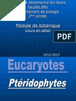 pteridophytes pteridophytes