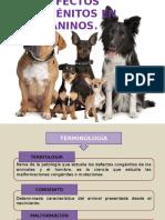 defectos congénitos caninos