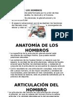 Anatomia de hombros