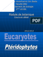 pteridophytes