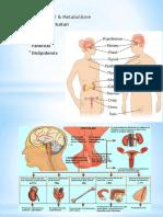 Ilmu Penyakit Dalam-Endokrin