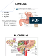Ilmu Penyakit Dalam-Gastroenterology