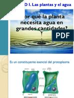 Las Plantas y El Agua I