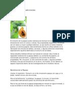 Papaya Usos Medicinales.