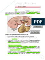 Anatomia Aparato Reproduc
