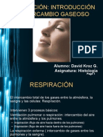 Ventilacion_Pulmonar_[Histologia]
