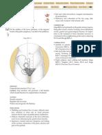 REN-2.pdf