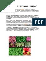 EL REINO PLANTAE.docx