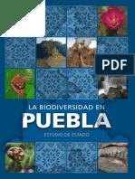 Bio Divers i Dad en Puebla
