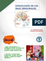 Neurofisiología de los sistemas sensoriales.pdf