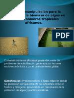 Uso de Biomanipulación Para La Reducción de La Biomasa en Reservas Tropicales de Africa