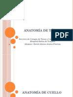 Anatomía de Cuello , Torax y Neuro