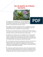 Manual de plantio do tribulus terrestris.rtf