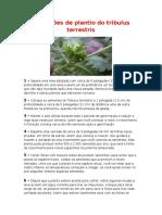 Manual de plantio do tribulus terrestris.rtf