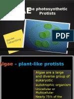 Algae Report (Biology)
