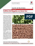 9ficha cultivo nogales zona sur.pdf