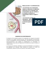 hormonas animales invertebrados.docx
