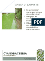 Cyanobacteria.pptx