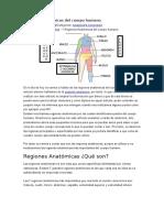 Regiones Anatómicas Del Cuerpo Humano
