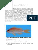 DONCELLA HEMANTHIAS PERUANUS.docx