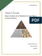 Tfg Bases Celulares de La Adaptacion de La Raiz Al Estres Abiotico