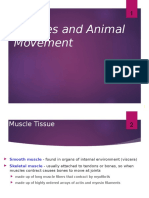 Lecture 4 Muscular System