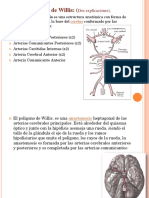 POLIGONO DE WILLIS.pdf