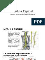 Médula Espinal, Vías Ascendentes y Descendentes