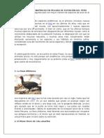 Los Animales Endémicos en Peligro de Extinción Del Perú