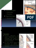 Meningitis Aguda 2010.pdf