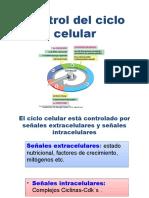 Control Del Ciclo Celular