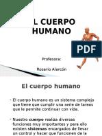 el cuerpo humano ppt