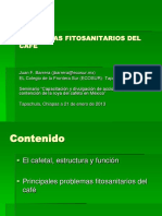 I. Problemas Fitosanitarios Del Café