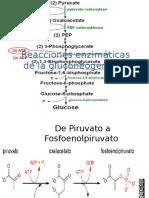 Reacciones Enzimáticas de La Gluconeogénesis