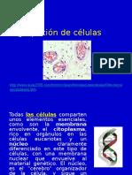 Clase 4 tejidos-aparatos-y-sistemas.pptx
