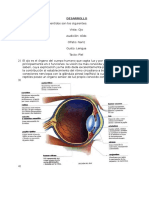 Partes de un ojo