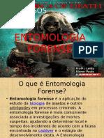 Seminario Entomologia Forense
