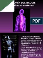 Clase 3 _Anatomía y Fisiología Del Raquis