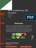 Aves Endémicas Del Ecuador