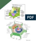 La membrana plasmática cumple varias funciones.docx